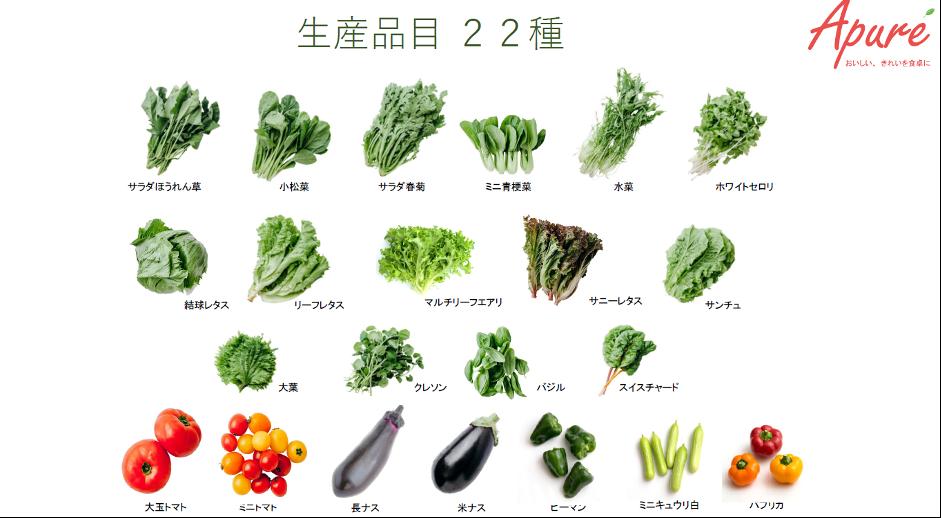 年間を通じた多品目の野菜栽培03
